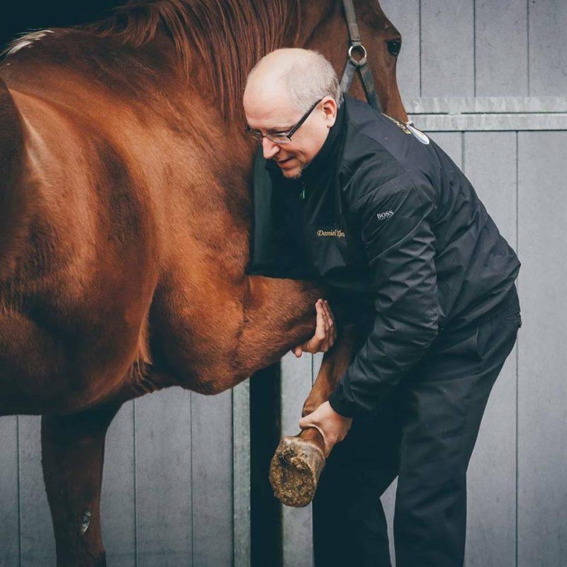 Kurs för kollegor inom manuell medicin på häst.
